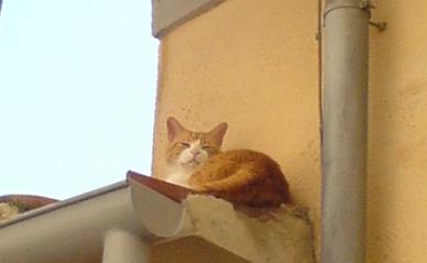 roofCat2