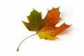 * Equinozio di autunno