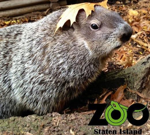 chuck-staten-island-zoo-13