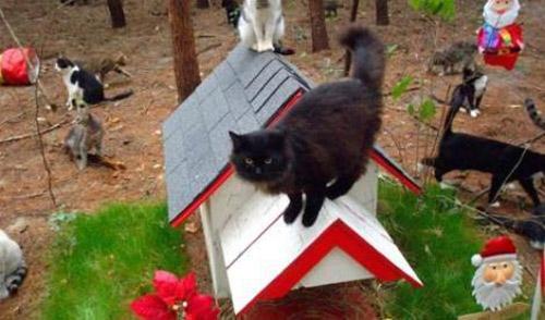 La buona notizia del venerd la citta dei gatti in for Piccoli progetti di ranch