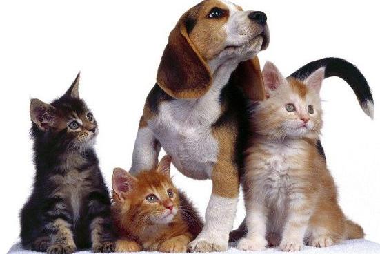 cani-e-gatti_nel-redditometro