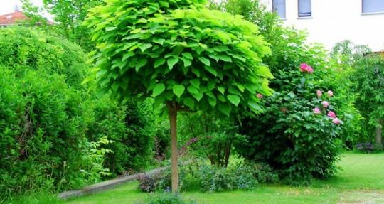 Zanzare divieto di accesso laurin42 - Piccoli alberi da giardino ...