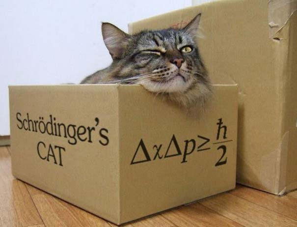 La Credenza Di Schrodinger : Il gatto di schrodinger u laurin