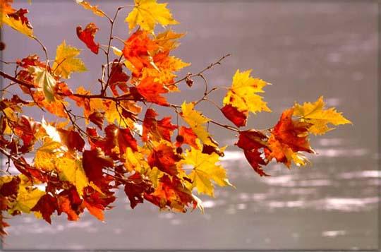foglie+d'autunno1