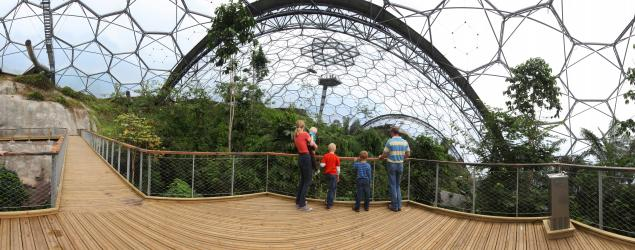 rainforest-aerial-walkway-panorama