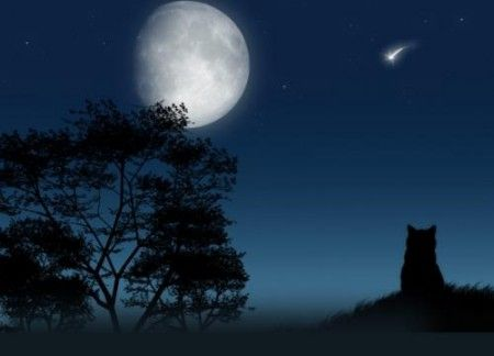 Risultati immagini per luna piena e gatto