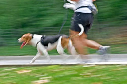 dog-walking-cane-che-corre-con-conduttore