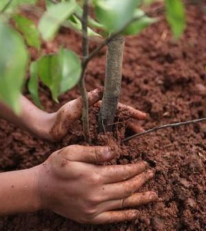 piantare-alberi-300x336