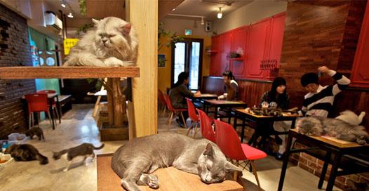 2-cat-cafe