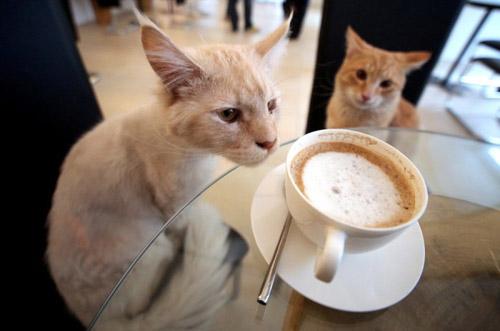 neko_café-700x463