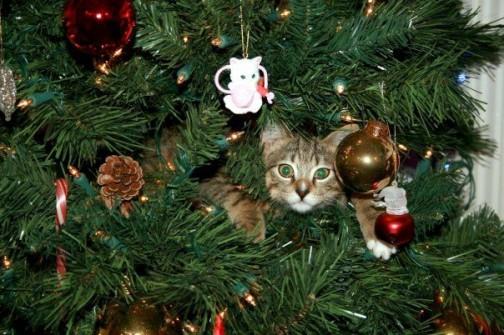 Gatti-albero-di-natale-1