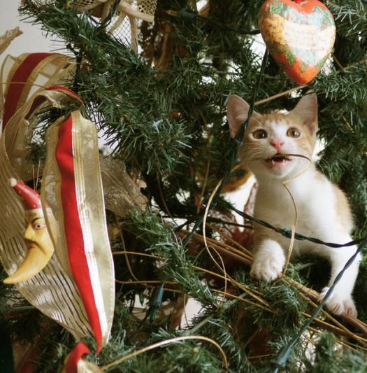 Gatti-albero-di-natale-18