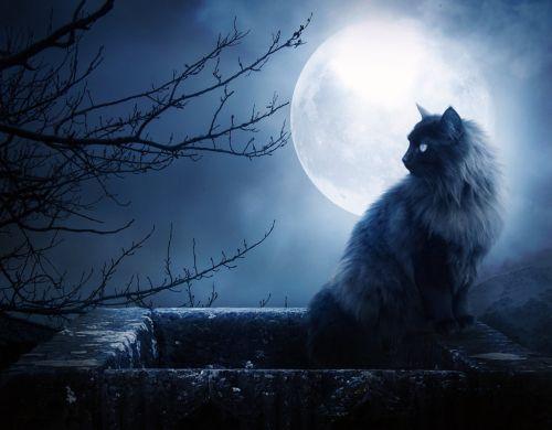gatti-luna-piena