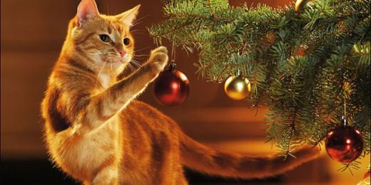 gatto-gioca-con-albero-jpg-640x320