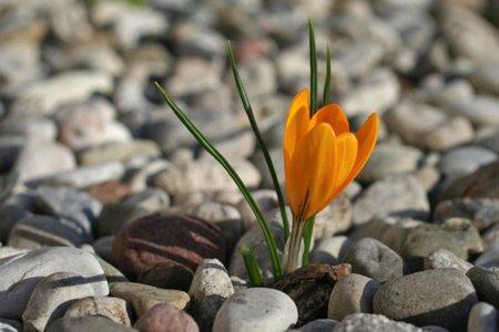 Un fiore nel deserto
