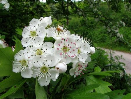 Albero delle streghe laurin42 for Albero con fiori blu