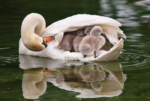 b2ap3_thumbnail_Bellissime-foto-di-mamme-animali-con-i-loro-cuccioli-03-1