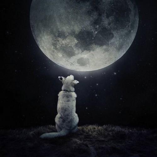 cane e luna