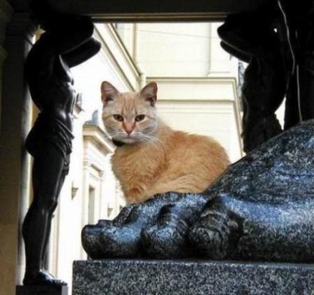 gatto-Ermitage