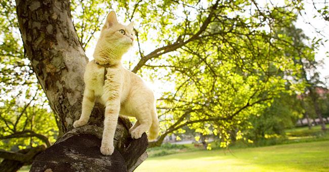 gatto_giardino