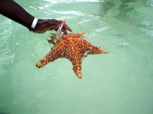 stelle-marine_128571