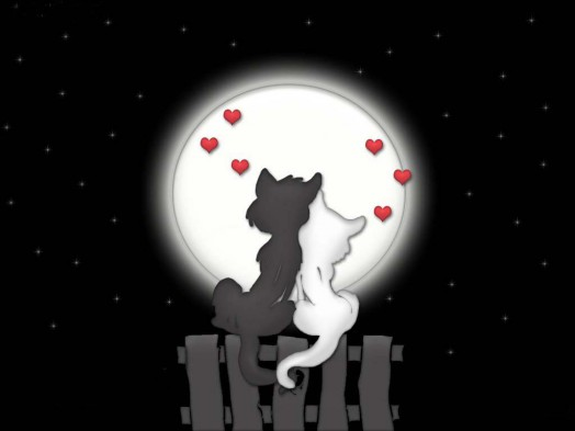 coppia-amore-gatti
