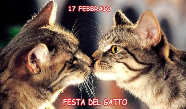 Festa_gatto