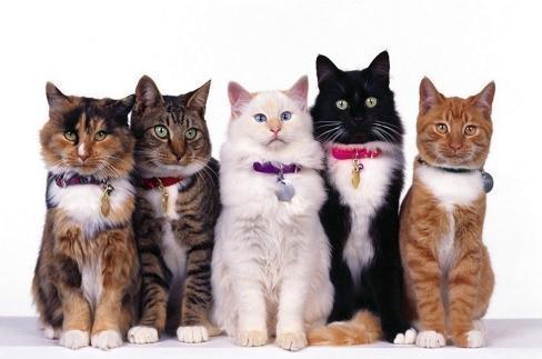 gatti-in-festa