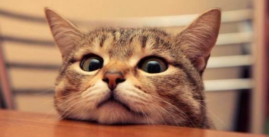 segreti_gatto