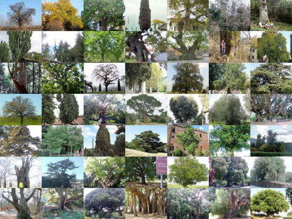 51-alberi-monumentali-su-florablog