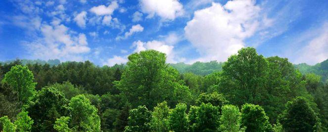 alberi-1440x580