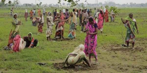 * La buona notizia del venerdì: Lo stato che ha piantato 50 milioni di alberi in un solo giorno