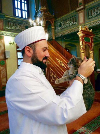 gatti_moschea_1