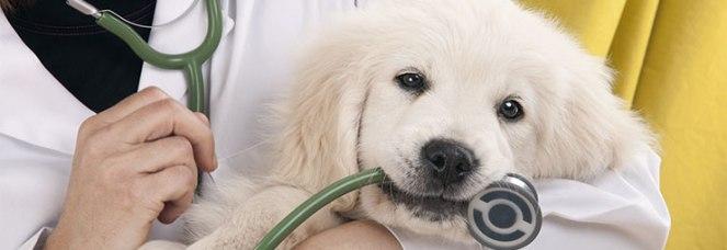 shutterstock_97664525_veterinari